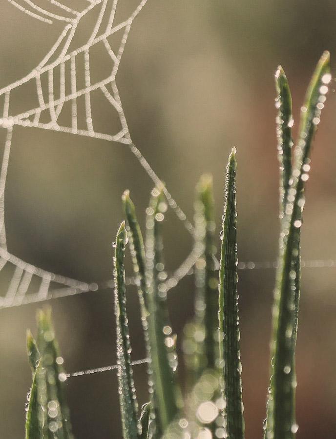 anna rusilko fotografia photography macro las forest natura nature toruń torun