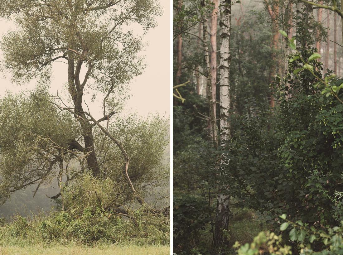 anna rusilko fotografia photography drzewo tree las forest nature natura staw toruń