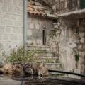 anna rusilko fotografia photography perast montenegro czarnogóa bałkany balkan adriatic sea