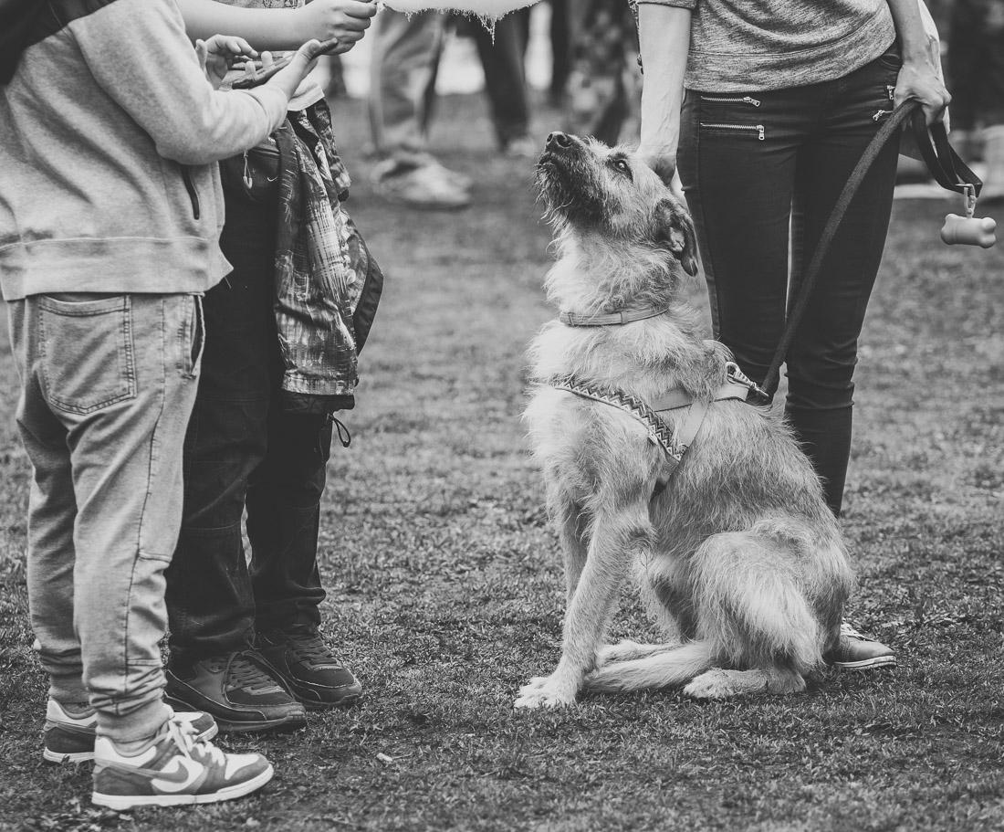 anna rusilko fotografia photography toruń schronisko dla psów pies dog