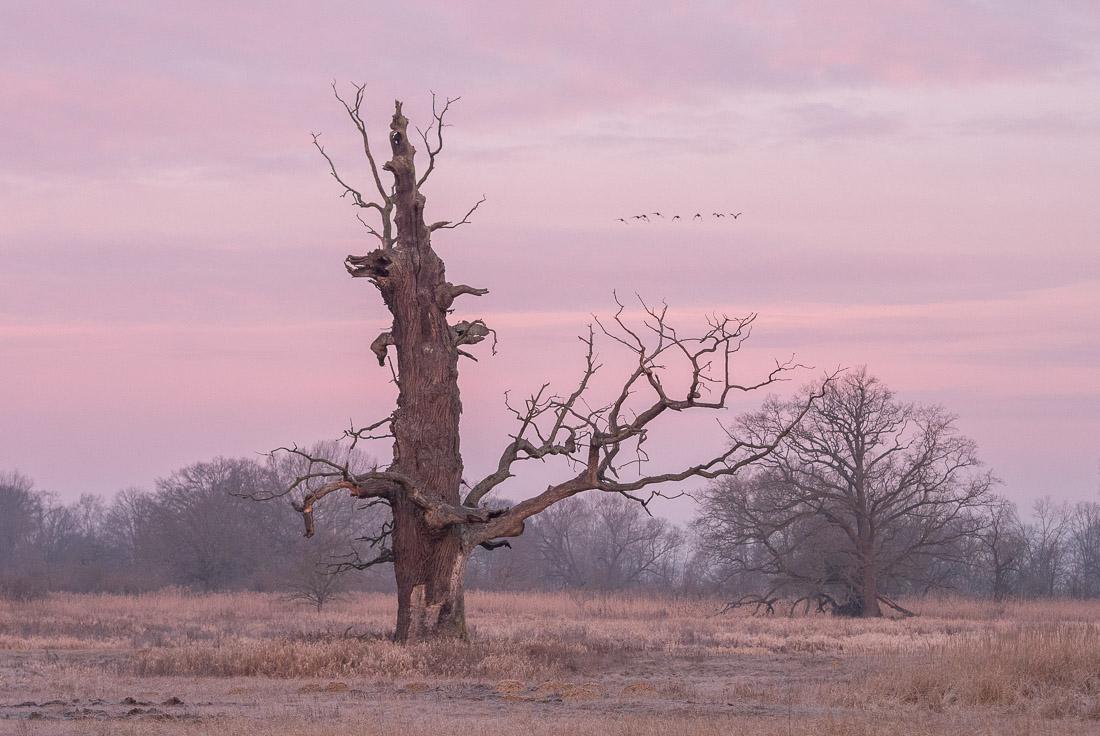 anna rusiłko fotografia photography dęby rogalińskie rogalin oaks rzeka warta river