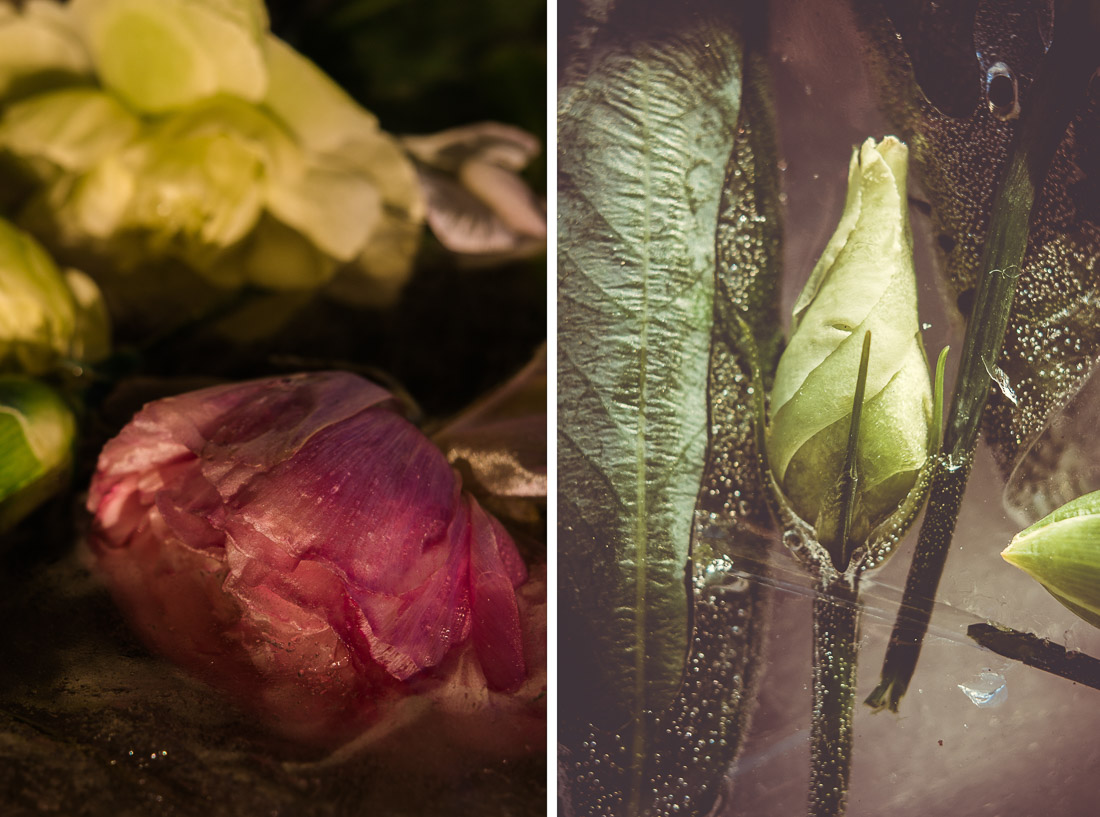 anna rusiłko fotografia photography kwiaty lód frozen flowers roses leaves ice winter