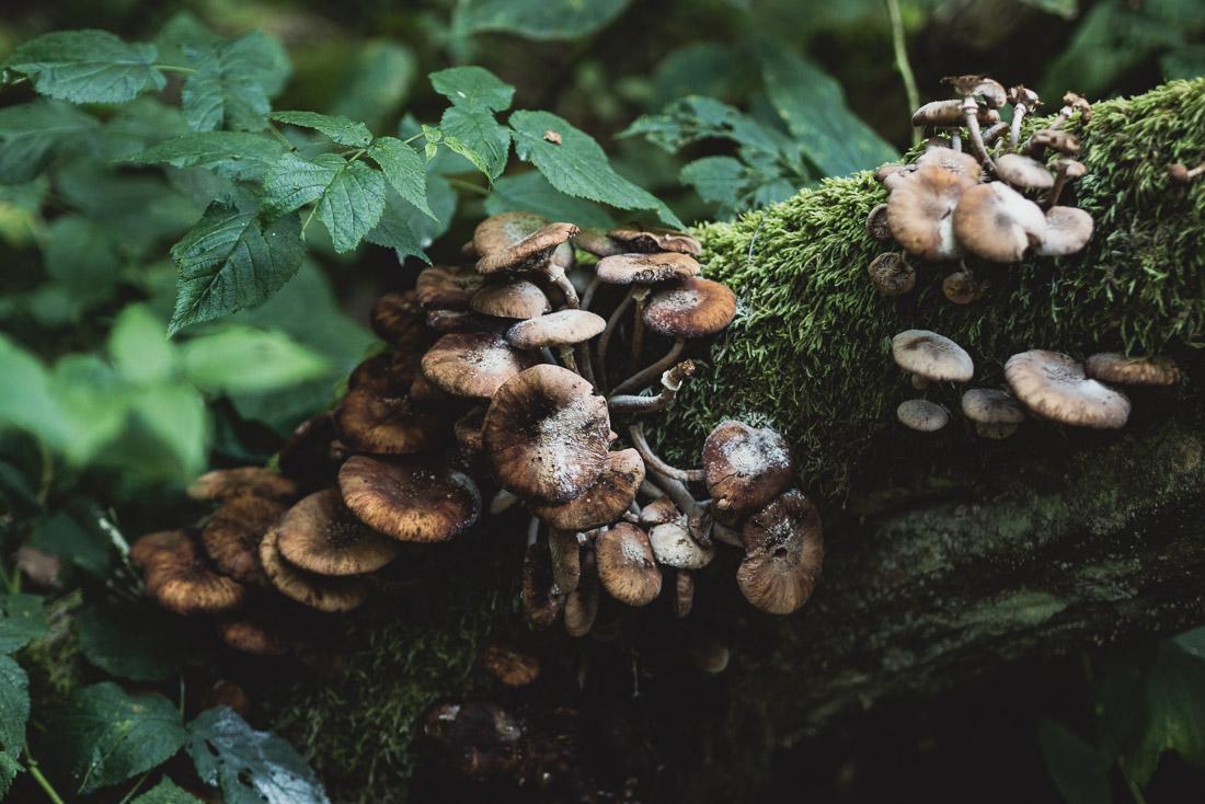 anna rusiłko fotografia photography puszcza białowieska podlasie grzyby białowieża forest mashrooms poland
