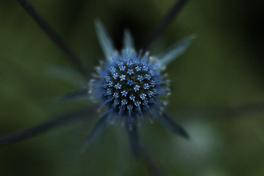 anna rusilko fotografia photography czerniewice tfs toruńskie spacery fotograficzne macro makro natura nature