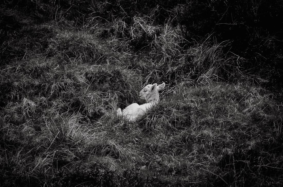 !16 anna rusilko fotografia photography szkocja scotland isle of skye duntulm-5