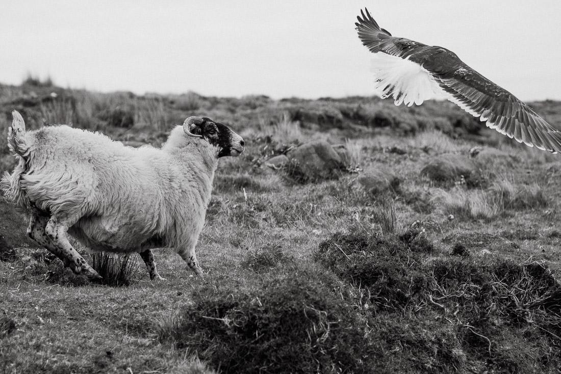 !18 anna rusilko fotografia photography szkocja scotland isle of skye duntulm-15