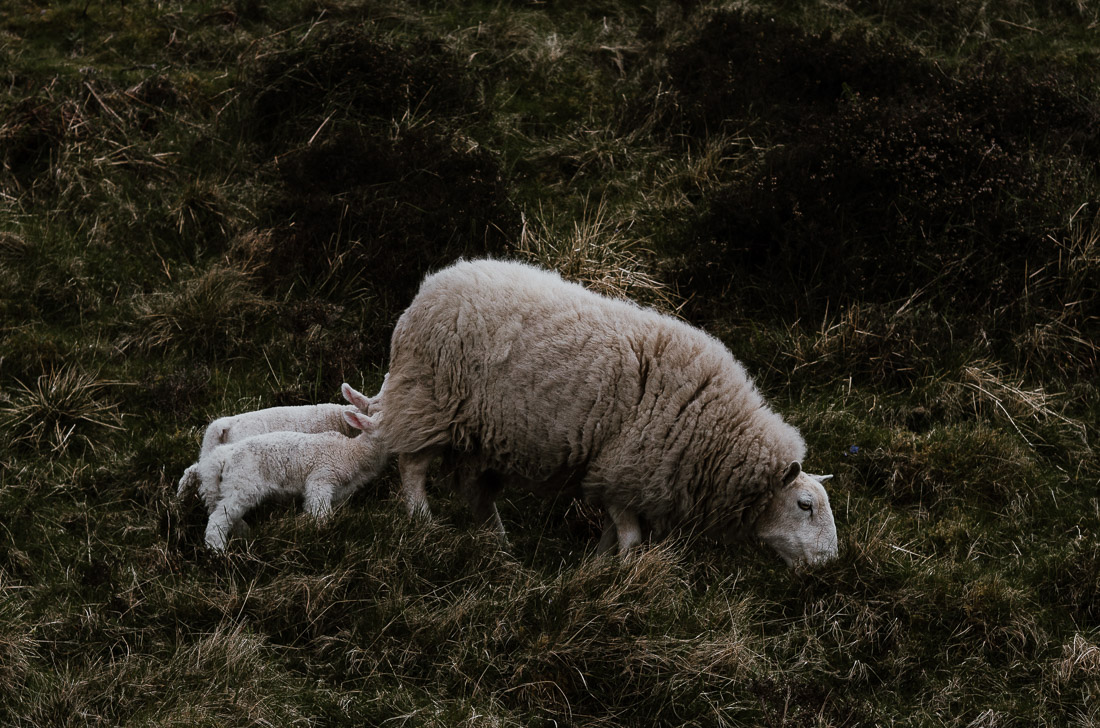 !28 anna rusilko fotografia photography szkocja scotland isle of skye duntulm-6