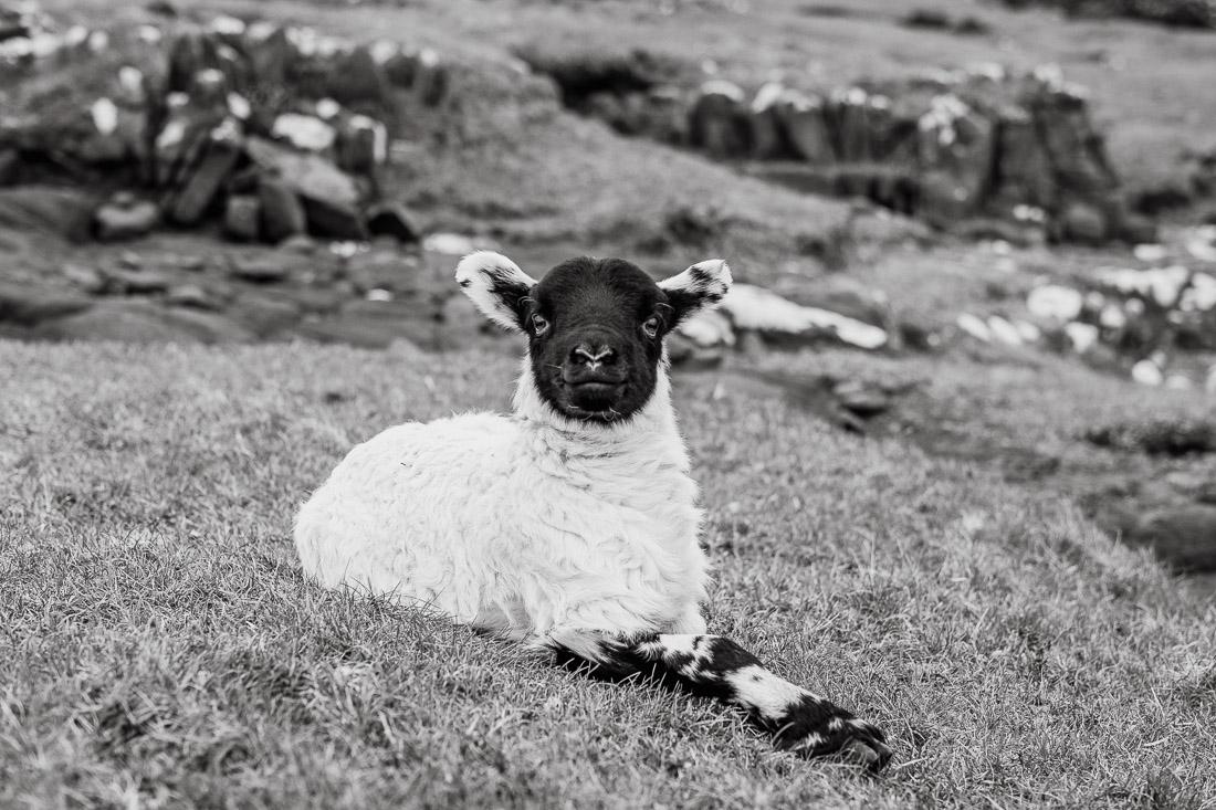 !36 anna rusilko fotografia photography szkocja scotland isle of skye duntulm -12