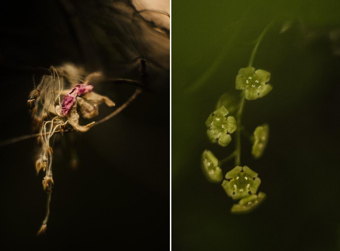 anna rusilko fotografia photography macro flowers kwiaty flies owady black and white forest las