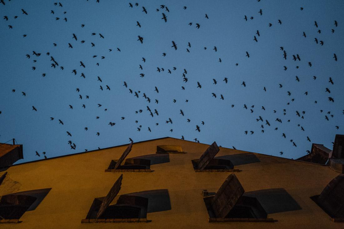 anna rusilko fotografia photography zima toruń winter paweł długokencki tsf toruński spacer fotograficzny światło mrok light dark