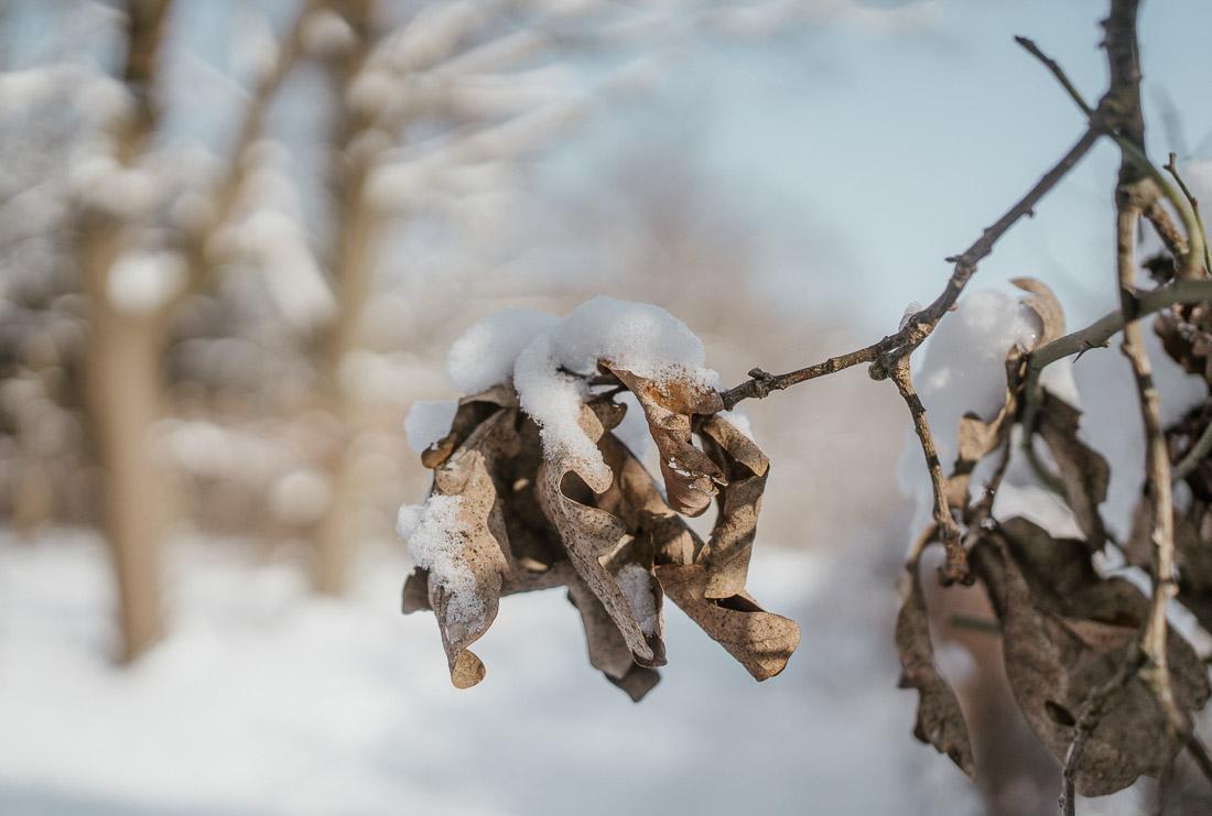 anna rusilko fotografia photography zima toruń mróz winter tsf toruńskie spacery fotograficzne śnieg snow