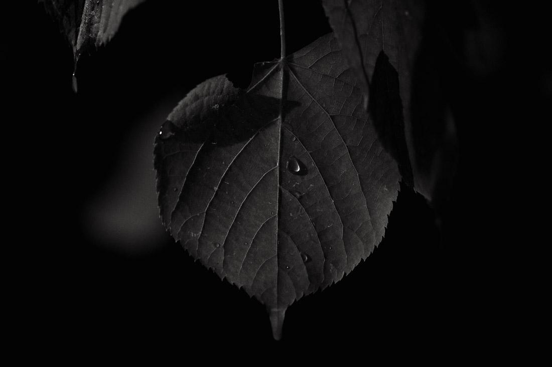 anna rusilko fotografia photography poezja poetry tsf toruńskie spacery fotograficzne